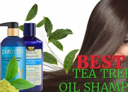 Best Tea Tree Oil Shampoo